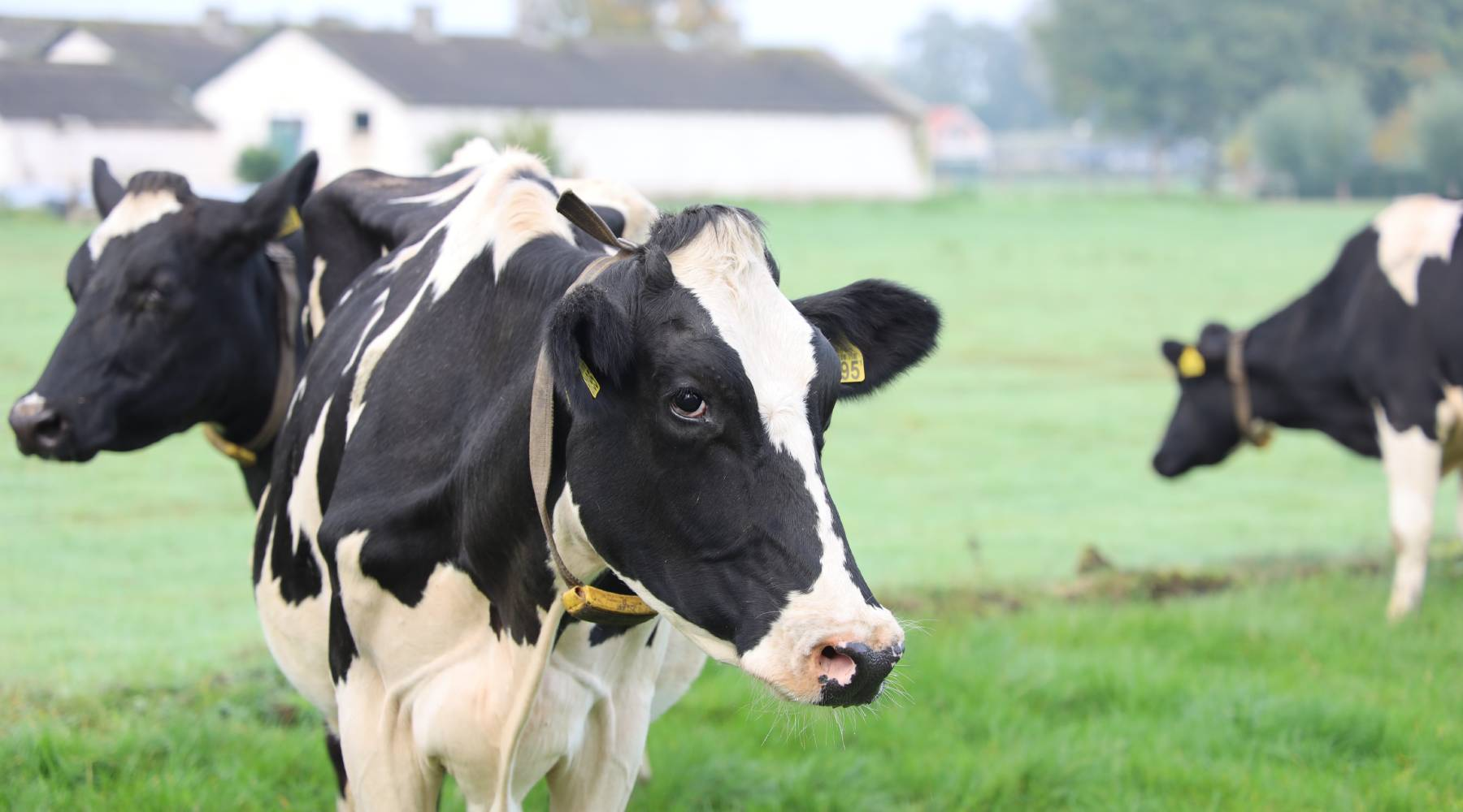 Dairy Production Analytics Linkedin Community - Smart4Agro